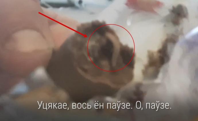 В Гродно в гипермаркете продаются конфеты с живыми червями