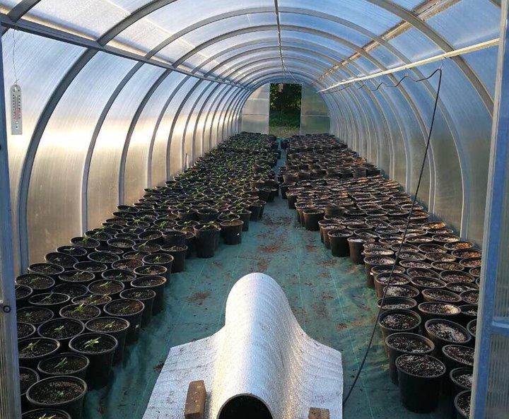В Гродненской области милиция обнаружила 1,4 тысячи горшков с коноплей