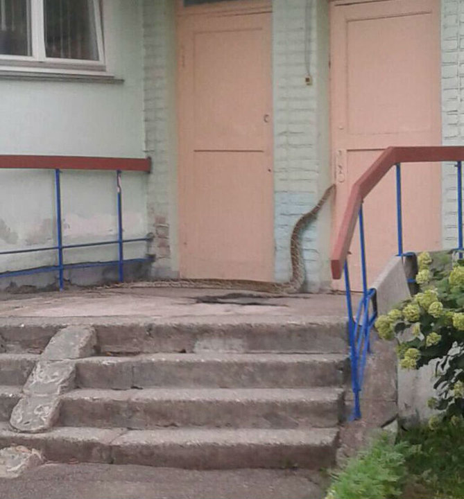 В Минске в детском саде поймали питона