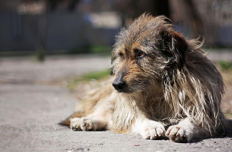 В Гродно мужчина повесил собаку на дереве