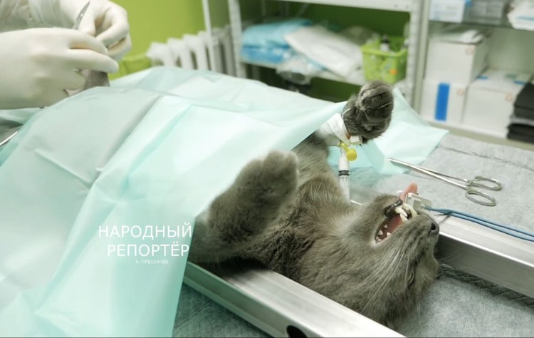 В Лиде впервые в стране протезировали коту лапу