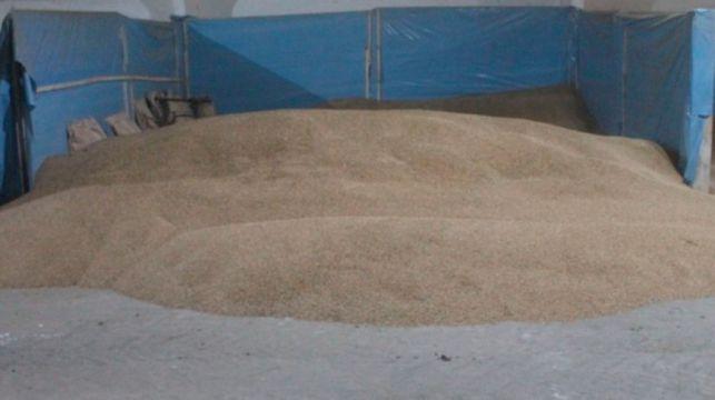 Бригадир хозяйства в Лидском районе присвоила 1,3 тонны тритикале