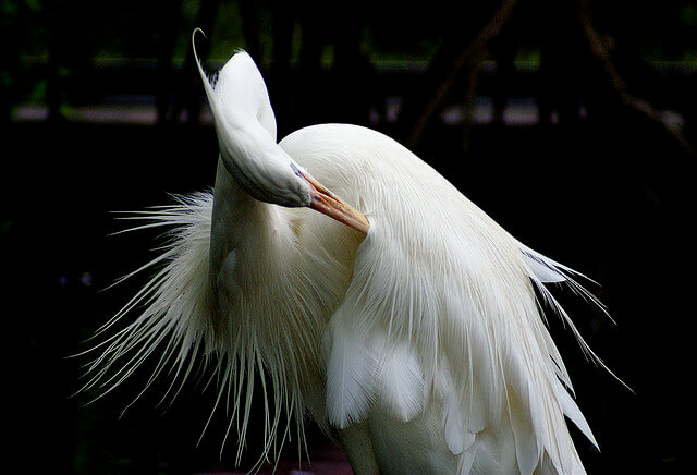 Белая цапля станет символом Лидского района