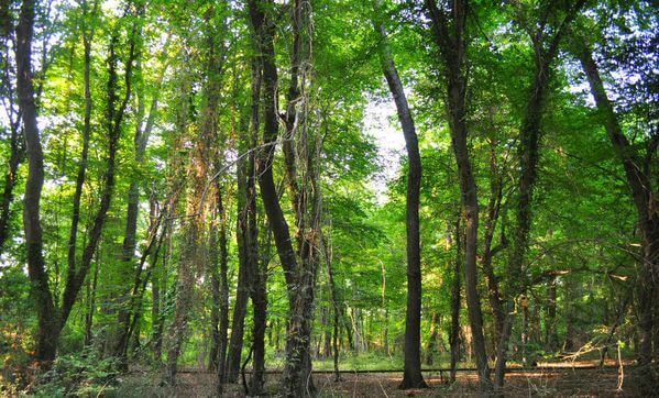В Лиде на дереве обнаружен труп лидчанина