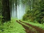 В Беларуси в 2011 году посадят 24 тысячи гектаров новых лесов