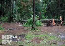 Это дерево упало на восьмилетнего Олега.