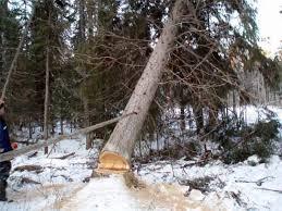 В Лидском районе 20-летний парень погиб на валке леса